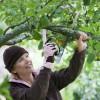 Damensäge Gardengirl