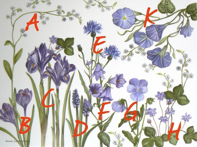 schwedische Namen von blauen Blumen