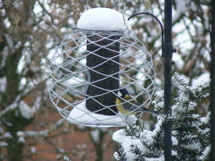 Kohlmeise in Vogelfutterstation